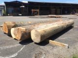 Beech  Hardwood Logs - 50 à 80 cm Beech Saw Logs from France