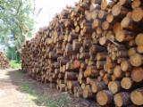 Industrial Logs - We Sell Maritime Pine ( Pinus Pinaster) logs