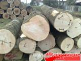 Industrial Logs - We Need Ash Industrial Logs, 40-50 cm