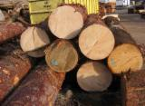 Ukraine Softwood Logs - Saw Logs, Pine - Scots Pine, Maritime Pine , Spruce