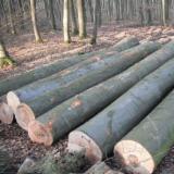 Softwood  Logs - European beech logs
