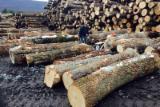 Ukraine Hardwood Logs - Saw Logs, Oak