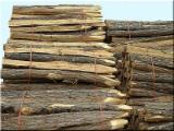 Acacia Hardwood Logs - We Need Acacia Stakes, 10-12 cm