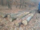 Bulgaria Hardwood Logs - White oak logs ABC FSC 100%
