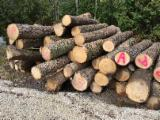 Hard Maple / Black Walnut / Red Oak Logs