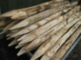 Acacia Hardwood Logs - We Need Poles For Fencing, Acacia/ Chestnut