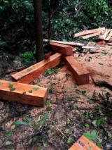 Cumaru Hardwood Logs - Colombian Cumaru