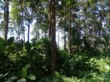 Forest And Logs South America - Ecuatorian Melina