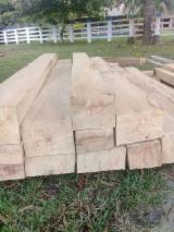 Colombia Hardwood Logs - White Colombian Oak