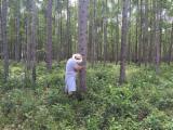 null - Colombian Eucalyptus Logs, 20 cm