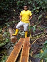 South America Hardwood Logs - Ecuatorian Teak