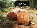 South America Hardwood Logs - Platymiscium pinnatum