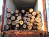 Lithuania - Furniture Online market - Offer birch logs, diameter 18+ cm