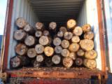 Stämme Für Die Industrie, Faserholz, Birke