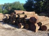 Bosques Y Troncos América Del Norte - Venta Troncos Para Aserrar Fresno, Nogal Negro, Roble Rojo Estados Unidos Wisconsin