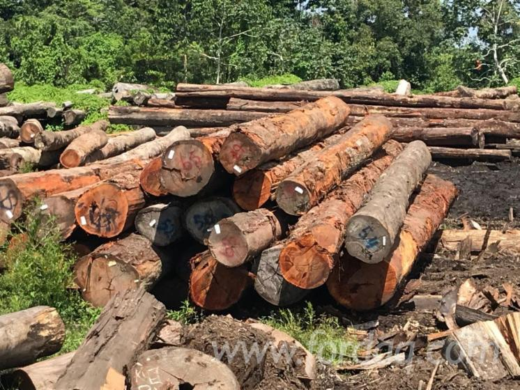 Selling-Bulletwood-Logs