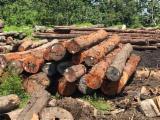 Schnittholzstämme, Maçanranduba