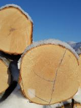Birch  Hardwood Logs - Birch logs