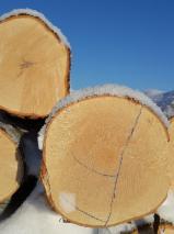 Wälder und Rundholz - Schälfurnierstämme, Birke, FSC