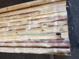 Comprar Pinus - Sequóia Vermelha, Abeto - Whitewood 19 mm