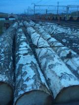 Birch  Hardwood Logs - 18-40 cm Birch Veneer Logs from Russia, Jewish Autonomous Region