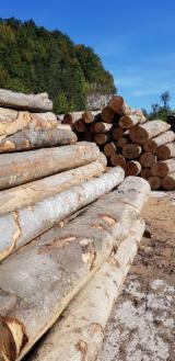 Beech  Hardwood Logs - 30-50 cm Beech Saw Logs Romania