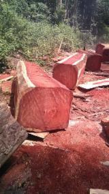 锯材及结构木材 非洲 - 木梁, 紫木, 非洲格木, 柚木