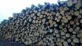 Hardwood  Logs Oak - Saw Logs, Oak, PEFC/FFC