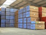 Sawn And Structural Timber - Beech Planks (boards) 3/4 FN France FRANCE - ALSACE