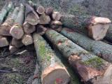 White Oak Saw Logs, ABC, 30+ cm