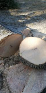 Finden Sie Holzlieferanten auf Fordaq - Schnittholzstämme, Esche