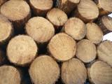 Šume I Trupce Južna Amerika - Za Rezanje, Bor -