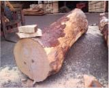 Maple  Hardwood Logs - We Need European Flamed Maple Veneer Logs For Music
