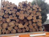 Stehendes Holz - Teak Stehendes Holz Kolumbien zu Verkaufen