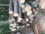 Hardwood Logs importers and buyers - 18+ cm Tilia  Saw Logs