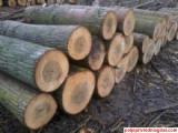Wood and Forestry Commercial Intermediation Services  - Komercijalista Za Promet Hrasta