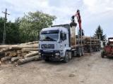 Camion Transport Busteni - Camion forestier Man, 6x4, macara Palfinger