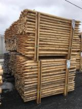 North America Softwood Logs - Northern White Cedar 2,5-3,5 in Debarked or Machine rounded with Knotty grade Stakes from Canada