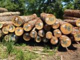 null - Southern Yellow Pine 20+ cm fresh cut saw logs Schnittholzstämme USA zu Verkaufen