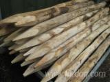 Forest And Logs - 6/8 - 8/10 - 10/12 - 12/14 cm Chestnut Poles