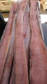 硬木:毛边材 - 毛刺 - 圆柱 樱桃 - 疏松, 樱桃