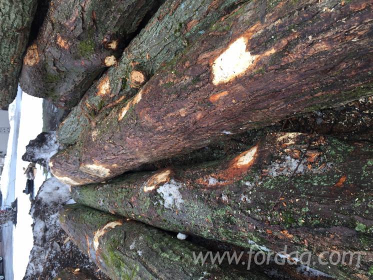 Hard-Maple-Saw-Logs