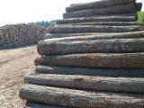 Furnierhandel - Laub Und Tropenholzfurnier - Linde, Rundschälfurnier