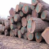 Forest And Logs North America - 2SC BLACK WALNUT LOGS (ORIGIN: DUBUQUE, IOWA)