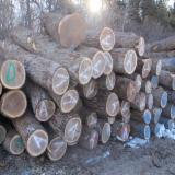 North America Hardwood Logs - 3SC BLACK WALNUT LOGS (ORIGIN: DUBUQUE, IOWA)