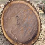 North America Hardwood Logs - 4SC BLACK WALNUT LOGS (ORIGIN: DUBUQUE, IOWA)