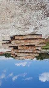 Hardwood  Logs White Oak - White Oak Saw Logs 2sc 10in +