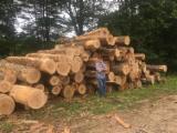 Oak  Hardwood Logs - 12 cm Red Oak, Black Walnut Saw Logs France