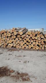 Forêts et Grumes - Vend Grumes De Déroulage Bouleau Latvia