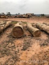 Bosse Hardwood Logs - Bosse Saw Logs, 67-103 cm